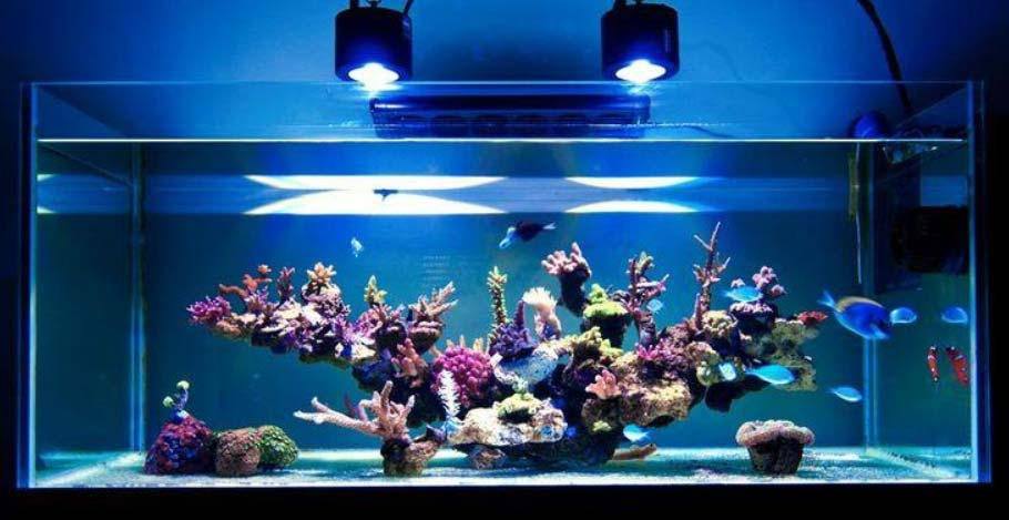 bare bottom reef tank with led lighting